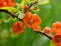 Растения, здоровье и красота